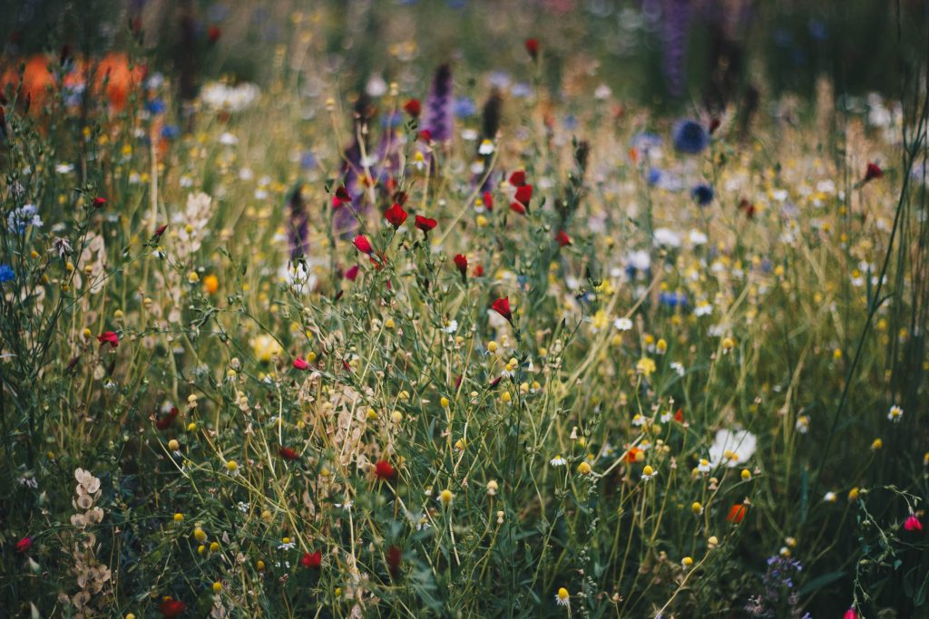 For Wildflowers in Wildlife Trust Shop